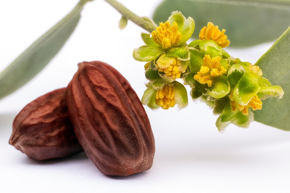 how to use,jojoba oil,benefits,uses,hair,nails,skin,natural,essential oils
